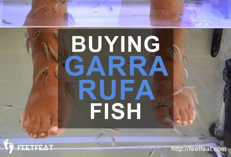 Buying Garra Rufa Fish