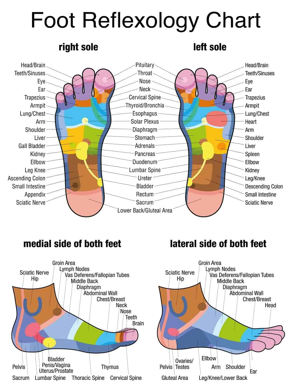 Foot Reflexology Chart