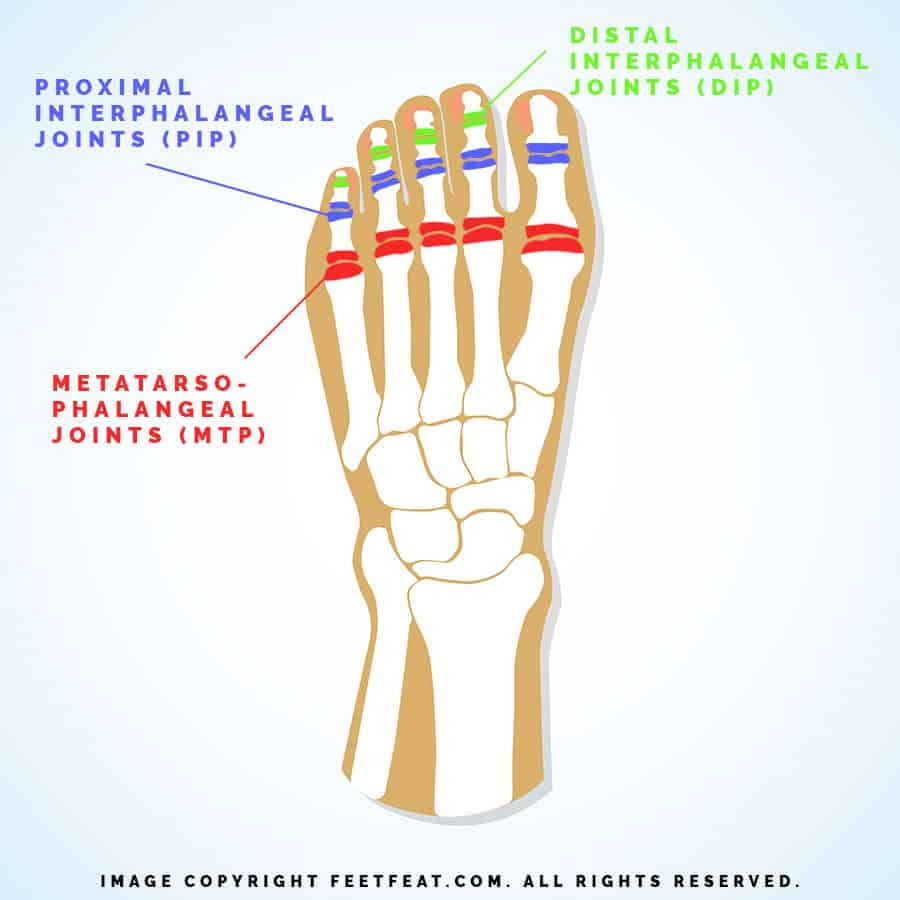 Toe Joints